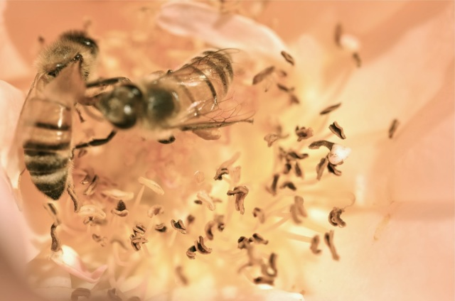 honey bee pictures, art photography, portland blogger