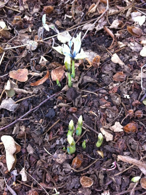 shoots, springtime, porltand blogger,
